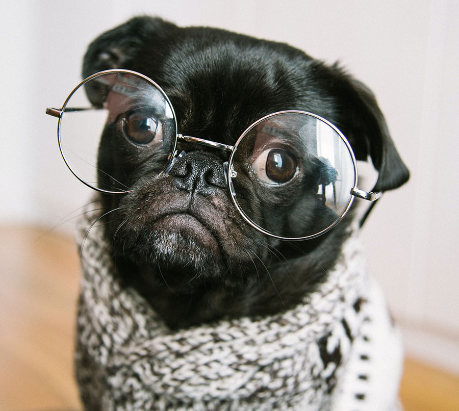 funny dog posing as model